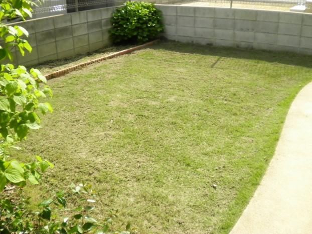 芝生の管理後